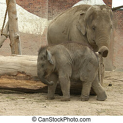 The large image of the big elephant cow with the small elephant calf.