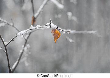 rown and orange leaf on birch tree on snowy autumn day