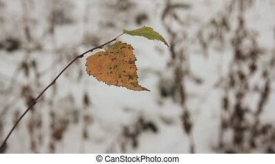 the last yellow leaves and the first snow