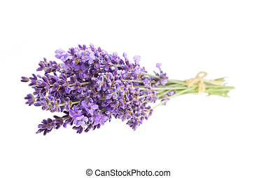 The Lavender flowers. - Bunch of lavender flowers on a white...