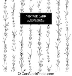 The Lavender tile frame line. Bunch of lavender flowers on a white background.