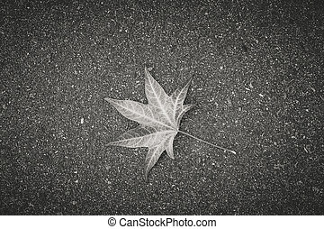 The leaf of the tree lies on gray textured asphalt.