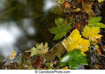 the leaves in the water