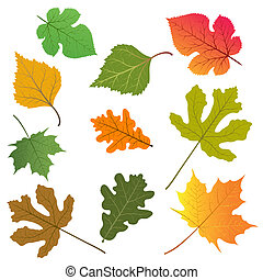 The leaves of trees - Vector illustration of the leaves of...
