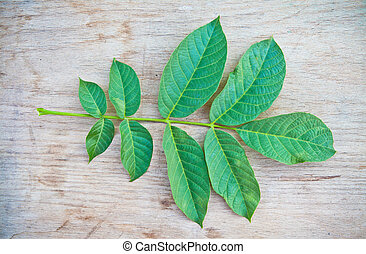 The leaves of walnut on the board