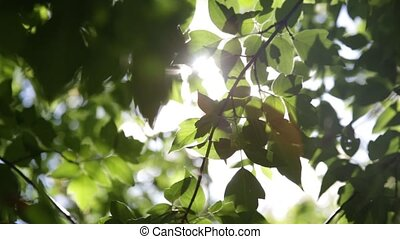 the leaves on a tree branch in summer