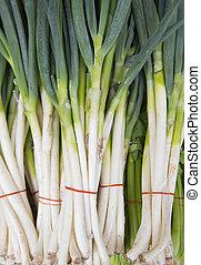 The leek vegetable, garlic