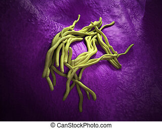 The legionella - medical bacteria illustration of the...