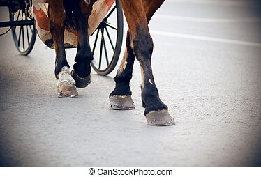 The legs of a brown horse harnessed to a carriage