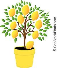 lemon tree in the yellow pot. - The lemon tree in the yellow...