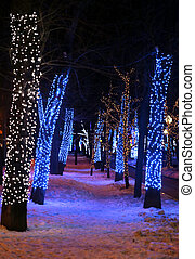 The lights in winter park