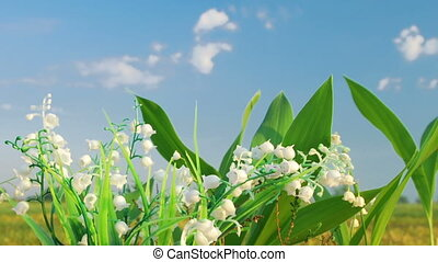 The lily of the valley on the cloud - Timelapse shot of the...