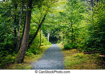 The Limberlost Trail, in Shenandoah National Park, Virginia.