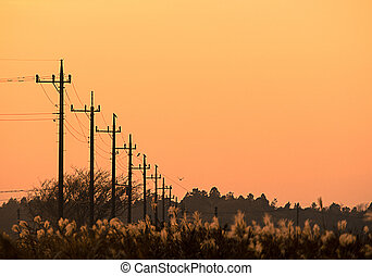 The line of the utility pole - Utility poles with a wild...