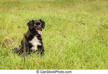The little black dog rested on the grass. Copyspace