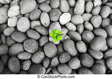 The little green tree on Black and White little rock ...