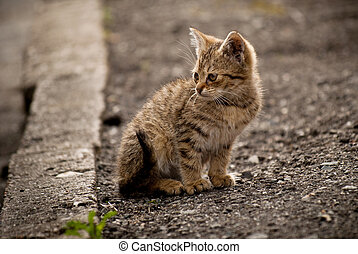 The little kitten sitting on the road