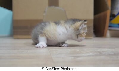 the little kitten takes the first steps around the room ....