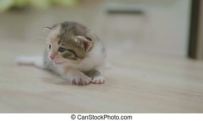 the little kitten takes the first steps around the room slow...
