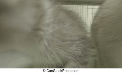 little kittens in a cage at the animal shelter