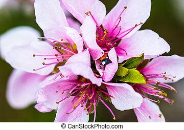 The little ladybird is hidden in a beautiful pink bloom