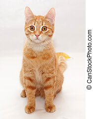 The little orange tabby kitten sitting on gray