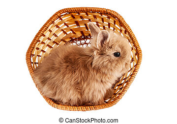 The little red rabbit sits in a basket