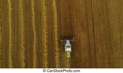 The lone harvester slowly harvests the grain of ripe wheat.