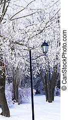 the lone lantern in the winter among the trees