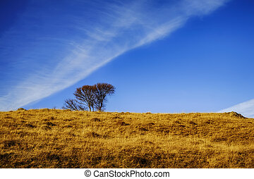 the lonely tree on the golden hill
