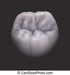 the lower molar tooth, eps10.