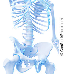 the lower spine