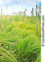 The lush green grass