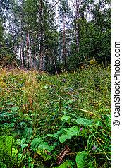 The lush summer vegetation