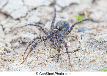 The macro shot of the small beautiful spider on the soil and sand in the sunny summer or spring day