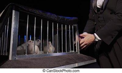 The magician put a white dove in a cage on a dark scene