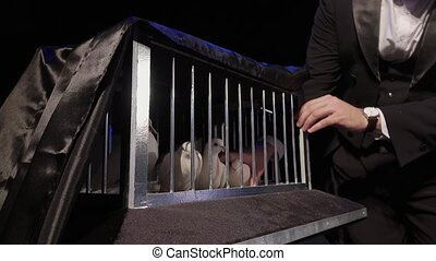 The magician took out a white dove from the cage on a dark scene