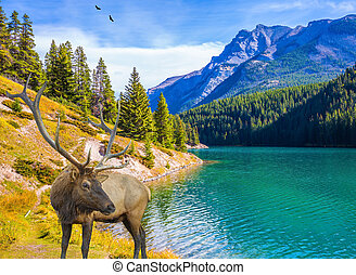 The magnificent deer graze at the lake