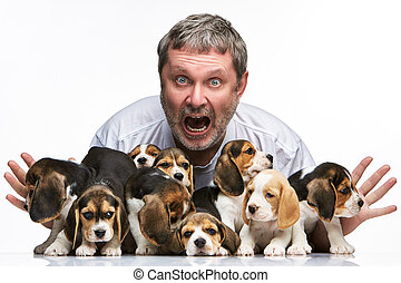 The zonked man and big group of a beagle puppies on white background