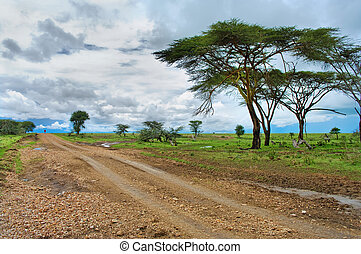 The man on the road in the African savannah