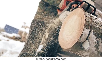The man woodsman with a chainsaw sawing a pine tree