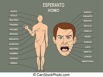 The manual for the study of the language Esperanto. The human body, a human head.