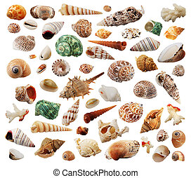 the many different sea-shells isolated on white