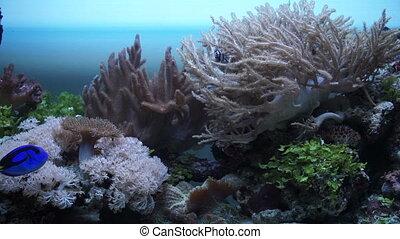 The marine fauna in the aquarium