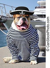 The mariner American Bulldog - American Bulldog dressed in a...