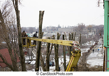 The men cut down trees on the street