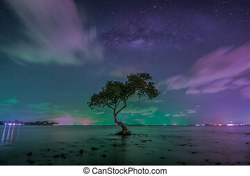 The milky way over big tree on beach in tropical beach with sky Thailand