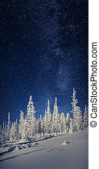 The Milky Way over the fir trees in the winter mountain forest.