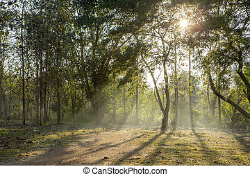 the mist at morning sun rise