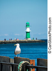 The Mole and a sea gull in Warnemuende, Germany